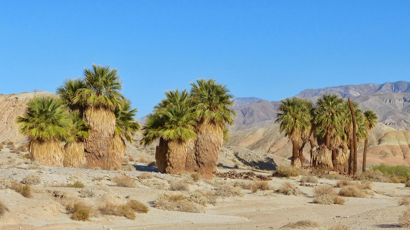 17 Palms Oasis Anza-Borrego Desert State Park by Fred Melgert