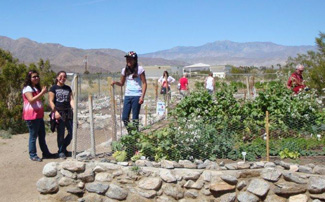 Desert Gardening in Borrego Springs