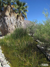 pupfish ponds borrego springs